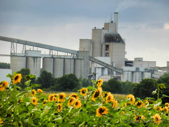 Cement Plant With Sunflowers by HeidiK1