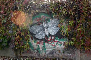 Moth by MrM4tty