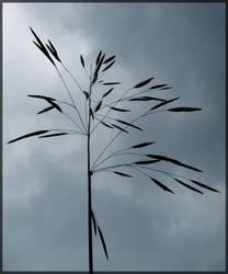 Flower in the Sky by rockfrogger
