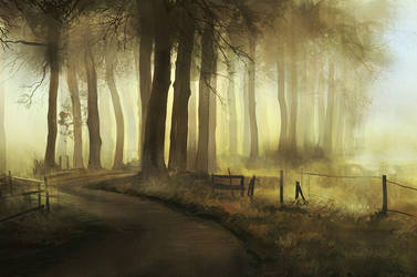 Forest road by eilidh