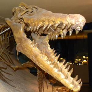 The-Last-Sea-Serpent's Profile Picture
