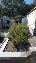 Rosemary in Lafayette Cemetery #1 by EdwardsOtherSide