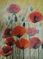 Poppies by martoo1973
