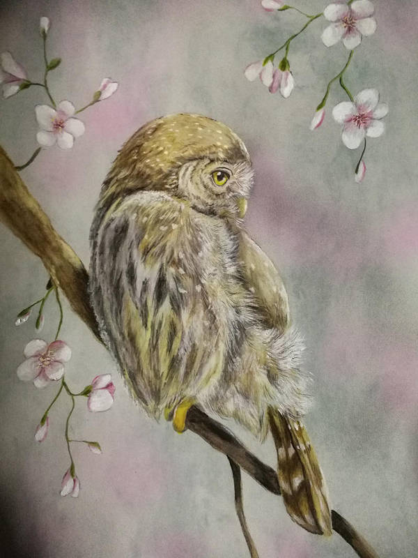 Owlandsakura by martoo1973