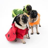 Halloween Pugs by dosecreative