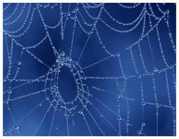 52 - Web by petteram