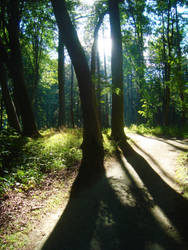 Forest Path X by dwarfeater