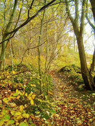 Autumn Forest Path by dwarfeater