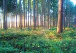 Forest XIV by dwarfeater