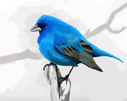Bird study by porojj