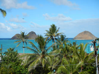 My front yard :) by lanikai-daydreamer