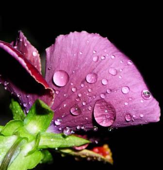 Di pioggia in pioggia by NightDark