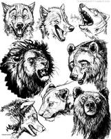 Lions, Bears and Wolves 4-6-16 by teagangavet