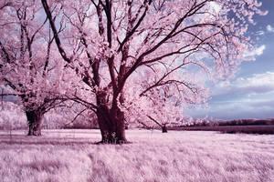 dreams of summer iii by BrianWolfe