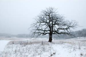 frosty oak by BrianWolfe