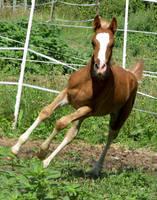 foal stock by linka064