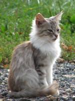 Cat stock by linka064