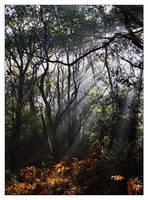 The Wildwood by Bogbrush