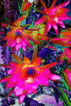Cactus Flowers-Psychedelic by OPTILUX