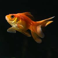 Dancing fish by squeekyjee
