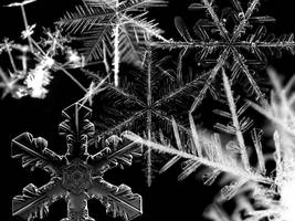 Snowflake wallpaper by Serenemeow