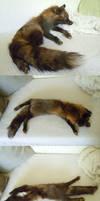 Tartarin-cross fox softmount by Kirin-Hunter
