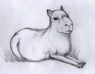 Capybara sketch by p1nkertoon