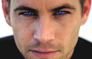 New 'Ole Blue Eyes by echoesfading