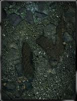 Jurassic Park IV Forum Avatar by lamewarrior