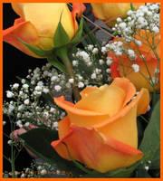 Roses by GeorgianaG