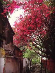 nature blaze by Secret-Treasures