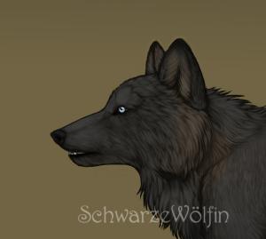 SchwarzWolfin's Profile Picture