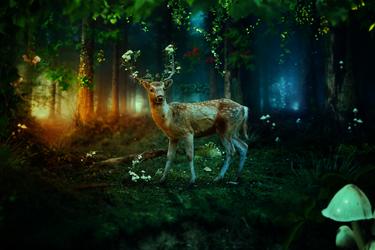 Luces del bosque by KellieArt