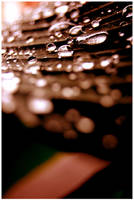 Water Droplets by music-of-the-night99