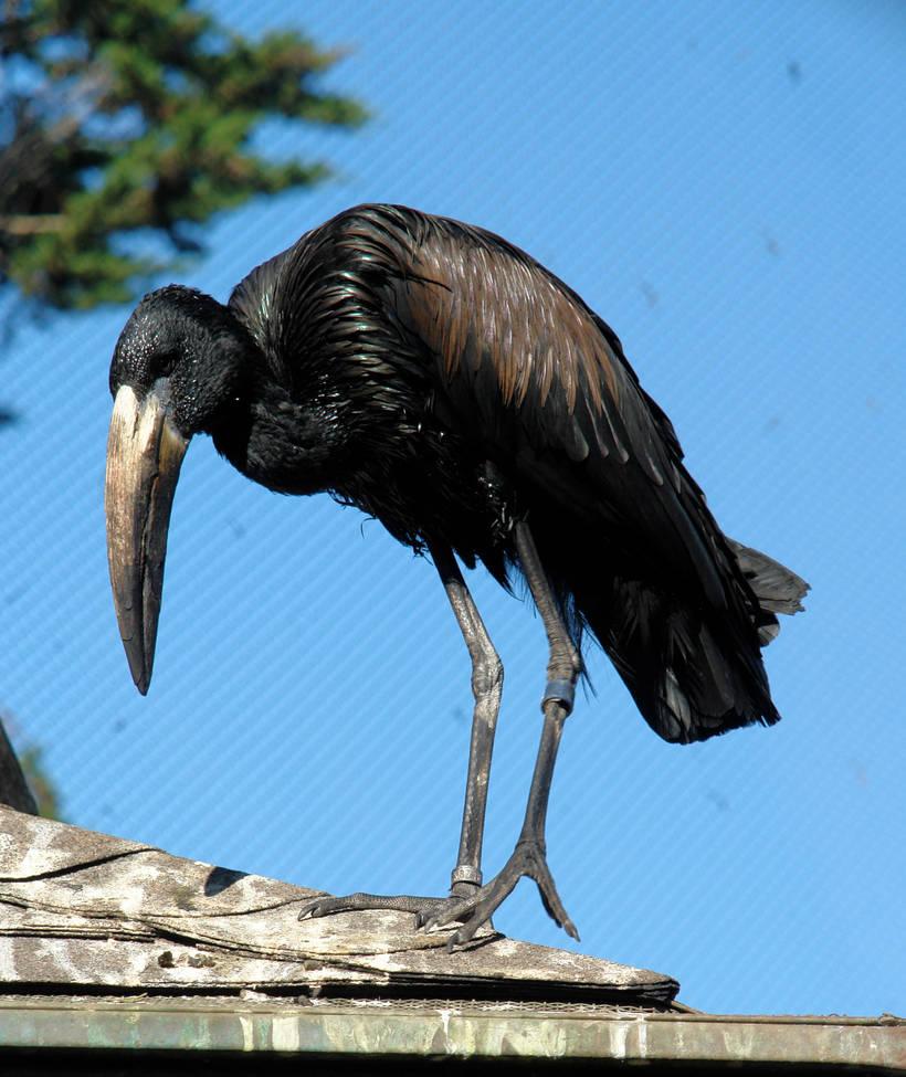 Creepy Bird by archistock