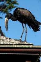 Creepy Bird 2 by archistock