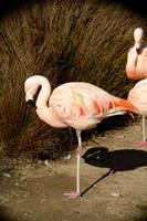 Pretty Bird by archistock
