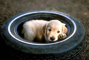 Dog Tired by kimbalina