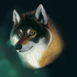 Wolf Study by fideauxx