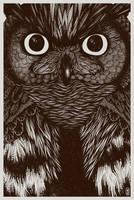 Owl by joniina