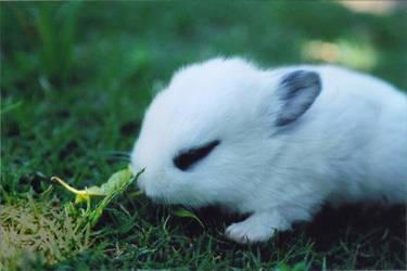 Bunny by diaztek