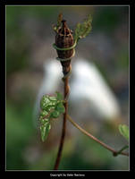 Garden Stuff by Selus