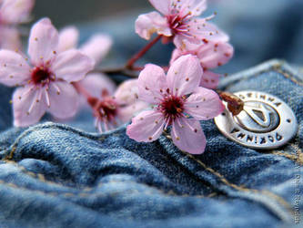 Cherry Blossoms Jeans 25 by DaleRReynolds