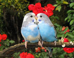 Valentine by kiwipics