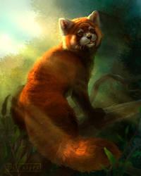 Red panda by DGrayfox