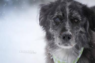 Winterday I by dark-cayden
