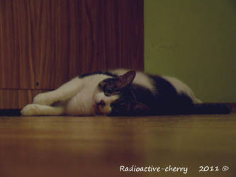 Alberty the cat II by Radioactive-cherry