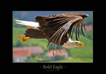 Bald Eagle by UnUnPentium115