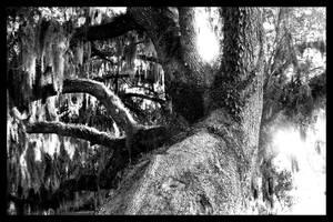 Mossy Tree B+W by Sathiest-Emperor
