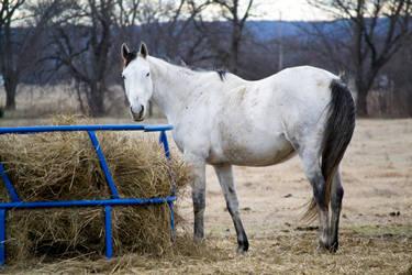 Horse at feeder in winter by evilhedgehog2011